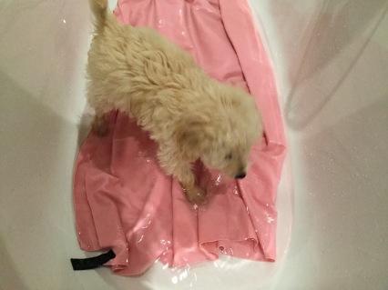 Puppy in first bath