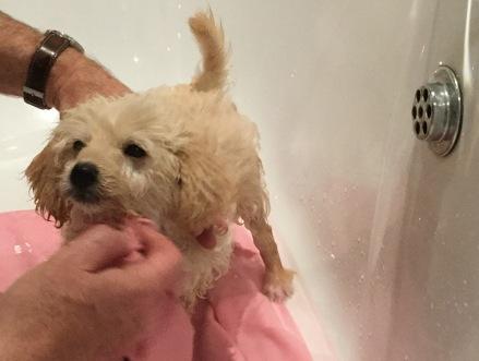 Puppy in bath