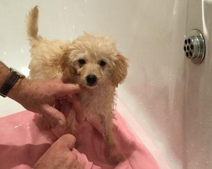 Puppy's First Bath